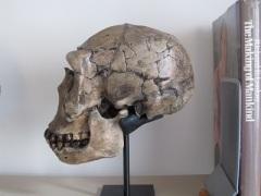 Blog skull medium